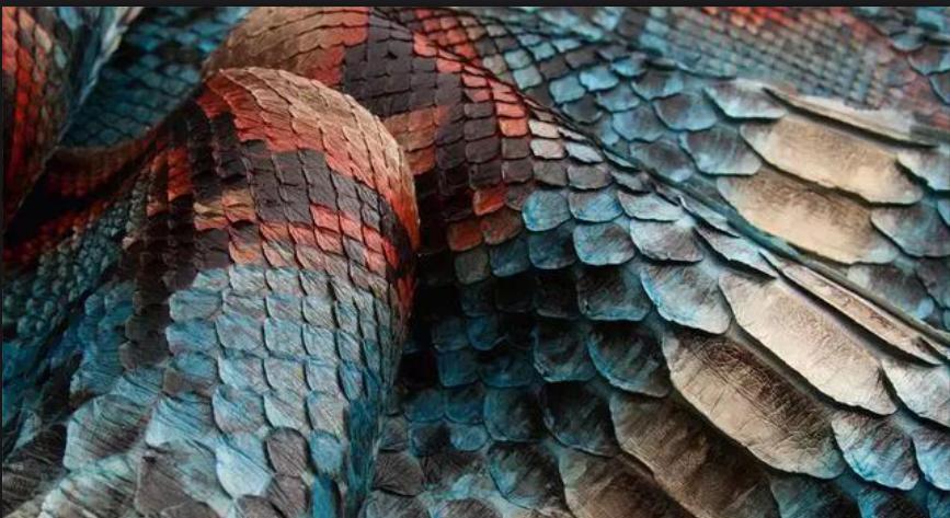 皮料的保养与辨别篇之:野性十足的蟒蛇皮